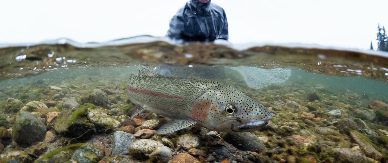Grand Canyon Fishing